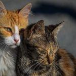 Zwei kuschelnde Katzen